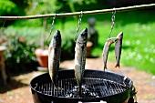 Aufgehängte Fische über einem Grill