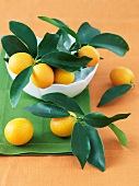 Bowl of Fresh Kumquats with Leaves