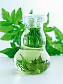 Bottle of herbs in water