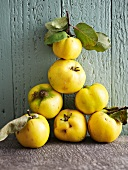 A pyramid of quinces