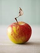 Ein Apfel mit Stiel und Blatt