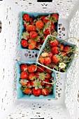 Punnets of fresh strawberries