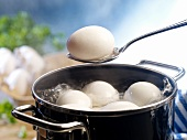 Eggs in pot of boiling water, one on a spoon