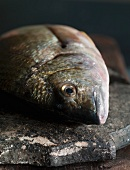 A fish on a wooden board