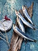 An arrangement of sardines