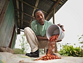 Arbeiter schüttet Kaffeebohnen aus Eimer
