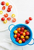 Red and yellow tomatoes in a blue colander