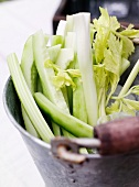 Celery stalks in metal pail with ice water
