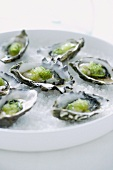 Oysters with wasabi and lime zest