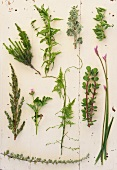 An assortment of wild herbs on a table
