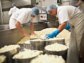 Workers packing cheese in factory