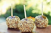 Three Caramel Apples Coated with Chopped Nuts