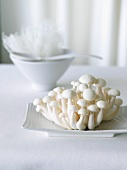 Cluster of White Beech Mushrooms