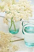 Elderflowers in a glass of water