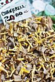 Fresh chanterelle mushrooms at a market