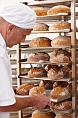 A baker placing a tray of freshly baked bread on a shelf