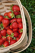 Fresh Picked Strawberries in a Basket