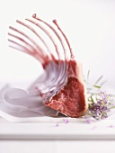 Raw rack of lamb with rosemary