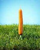 A carrot on grass