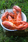 Steamed Maine Soft Shell Lobsters in a Bowl; Outdoors