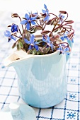 Borage flowers in an old coffee pot