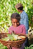 Children in a corn field