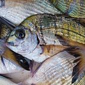 Fresh sea bream (gilt-head sea bream)