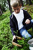 A boy picking blueberries in a forest