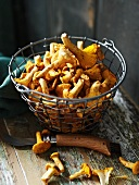 Fresh chanterelle mushrooms in a wire basket