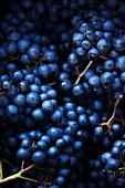 Red grapes (full frame)