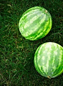 Two watermelons in a field