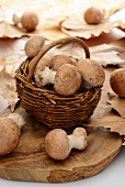 Brown mushrooms in a basket with autumnal leaves