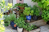 Pots of fresh herbs on terrace