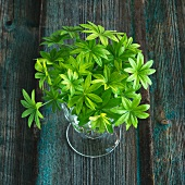 Fresh woodruff in a glass of water