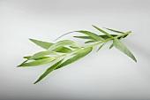 Badischer Estragon (Artemisia Dracunculus)