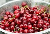 Freshly washed cherries in a metal bowl