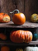 Various pumpkins on a rustic wooden shelf