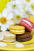 Colourful macaroons and white windflowers