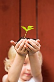 Little girl holding a seedling in a lump of soil