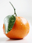 A clementine with a stem and a leaf