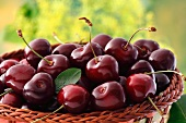 Fresh sweet cherries in a basket
