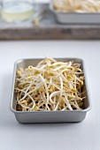 Bean sprouts in a bowl