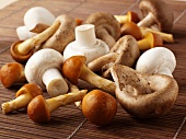 Champignons und asiatische Pilze