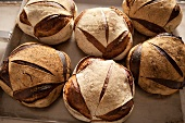 Six loaves of country bread