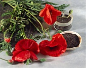 Poppies and poppy seeds
