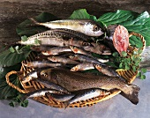Various fish in a basket