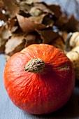 A Hokkaido pumpkin, an ornamental pumpkin and bay leaves