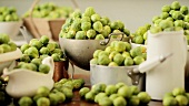 Brussels sprouts in assorted pots and dishes (section)