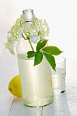 Holunderblütenlimonade in Flasche & Glas