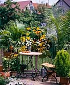 Chinesische Schirmpalme (Livistona Chinensis), Weissstammpalme (Ravanea Rivularis), Pantoffelblumen (Calceolaria) Sanvitalia und Sonnenhut (Rudbeckia Hirta) auf einem Balkon